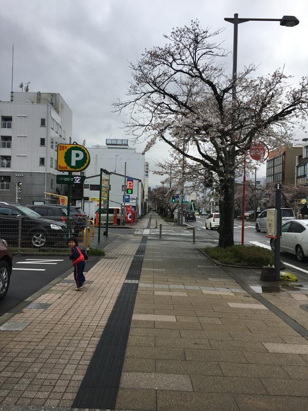 福井の桜通り